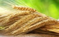 Conab promove Pepro de trigo e borracha na próxima quinta-feira (20).
