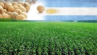 "Volume extra de soja argentina seguirá ""ventos do mercado""."