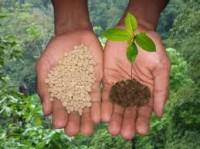 Estudo aponta que estratégia para comprar fertilizante pode ser diferencial de lucro da próxima safra.