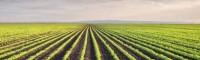 Grãos: técnica aumenta produtividade em até 26 sacas por hectare no Sul