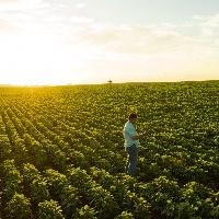 Participação do agronegócio no mercado de trabalho aumentou