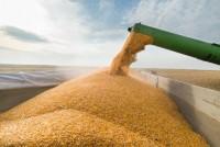 Milho abre a 6ª feira operando em campo misto na B3