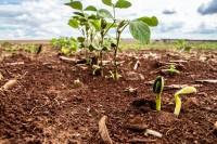 Adubação do solo: como conseguir os melhores resultados
