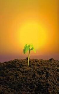 Silício na correção da acidez do solo