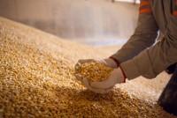 Cotações do milho subiram no mercado brasileiro em julho