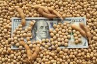 Dólar recua e esvazia negócios com a soja no Brasil
