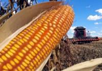Isenção de imposto para importação do milho deve sair até o fim deste mês