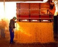 Custos da soja e do milho tem elevação de 50% no período de 12 meses