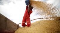 Soja: exportações brasileiras somam 757,393 mil toneladas em setembro
