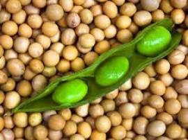 Soja: Mercado ameniza perdas em Chicago nesta 2ª feira e preços sobem nos portos do Brasil.