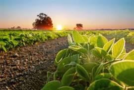 Abertura Nacional do Plantio da Soja será em Campos Novos (SC), em 30 de setembro