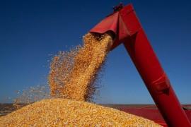 Bolsonaro zera alíquotas de impostos sobre importação do milho até o fim de 2021