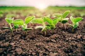 Soja/Cepea: Baixa umidade reduz ritmo de semeadura no Brasil