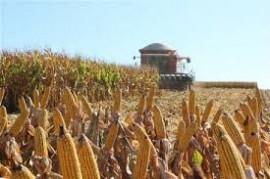 Segue colheita do milho no Rio Grande do Sul